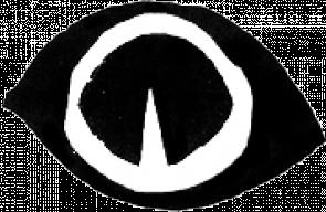 ojoweb_12-295x192